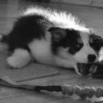 Chispa: Puppynado