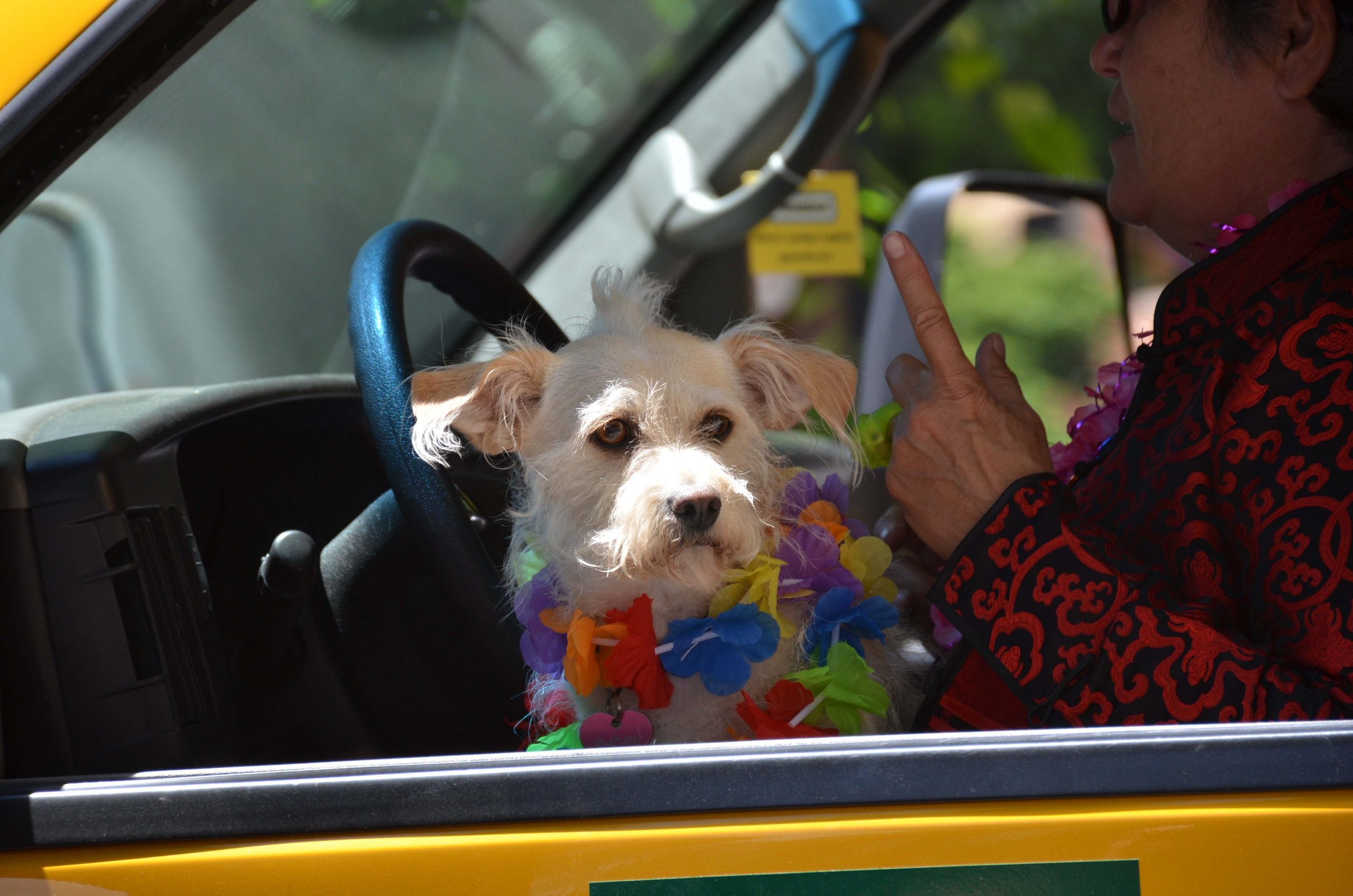 Pride Parade Puppy. Or maybe a mogwai. Not sure