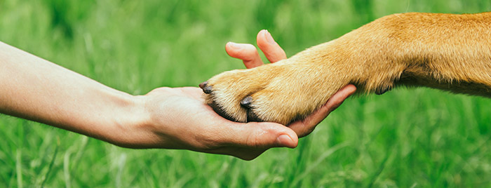 dog-paw-in-human-hand